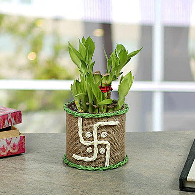 Swastika Two Layer Bamboo plant:Navratri Gifts