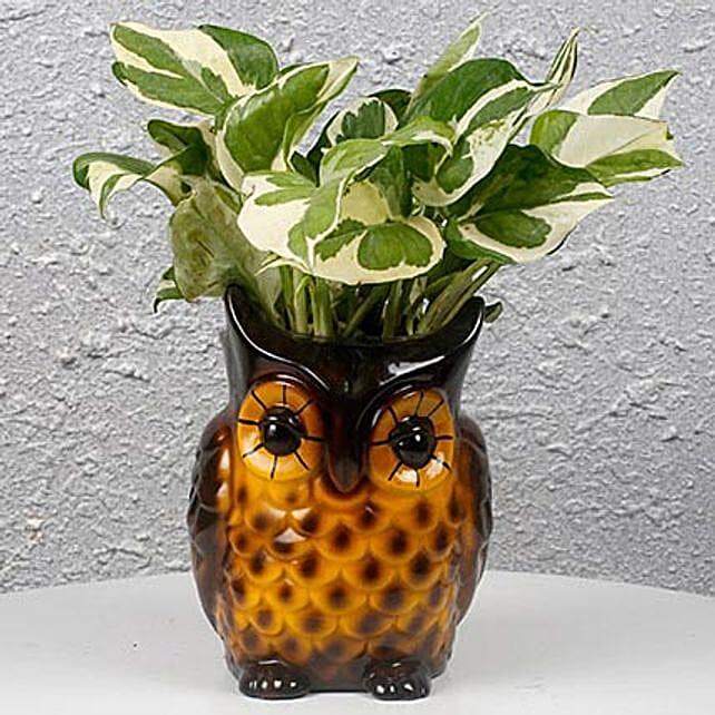 Pothos plant with owl vase