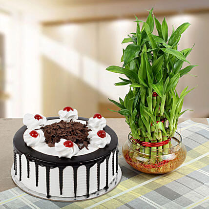Blackforest Cake N Three Layer Bamboo