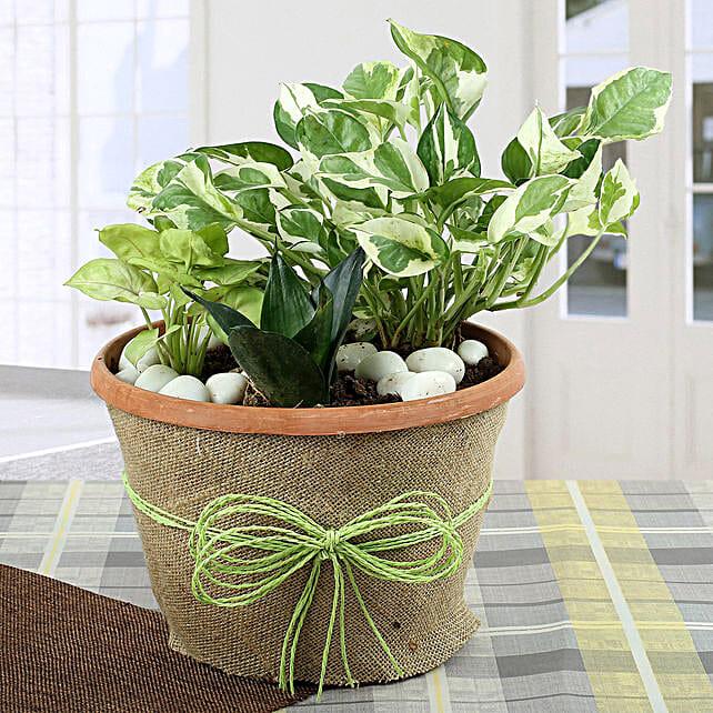 Air Purifying Dish Garden