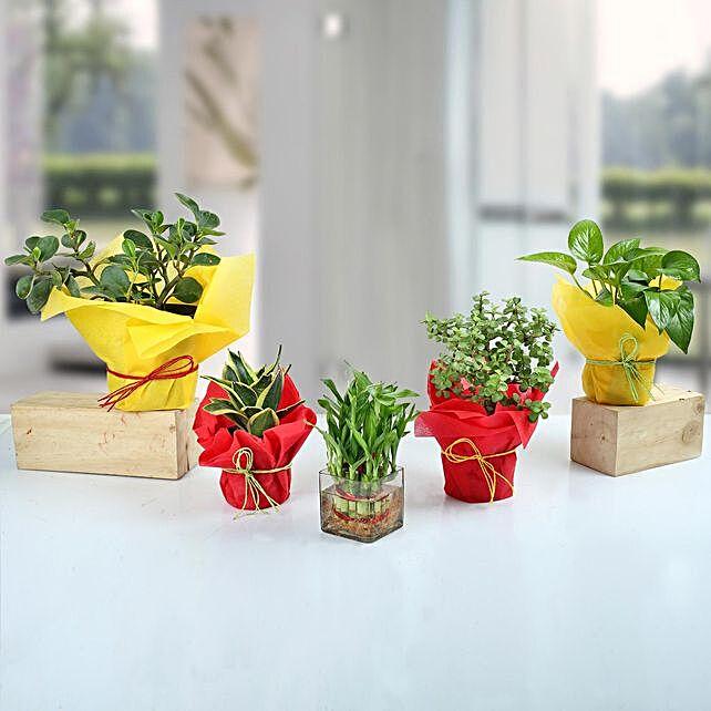 Set of 5 Fantastic Indoor Plants