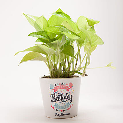 money plant in message pot:Buy Personalised Planter