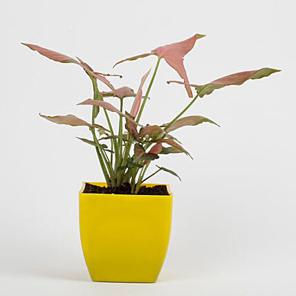 flower plant in yellow pot