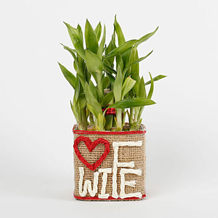 Two Layer Lucky Bamboo For Wife