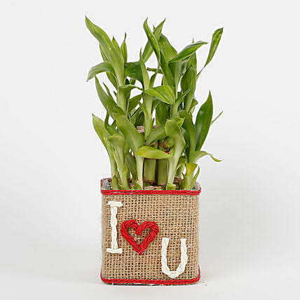 Two Layer Lucky Bamboo in a Glass Vase I Love You:Send Plants for Valentines Day