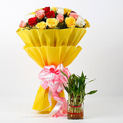 Mixed Roses Bouquet & Two Layer Lucky Bamboo Plant Combo