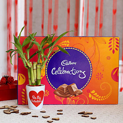 Cadbury And Bamboo Plant for Valentine