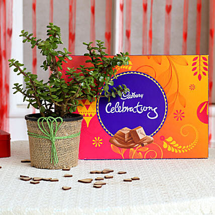 Jade Plant & Cadbury Celebrations Combo