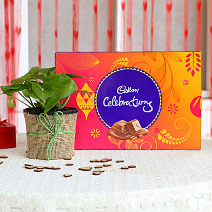 Money Plant with Chocolate Combo for Valentine