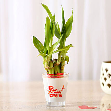 Lucky Bamboo In Hugs & Kisses Printed Glass Vase