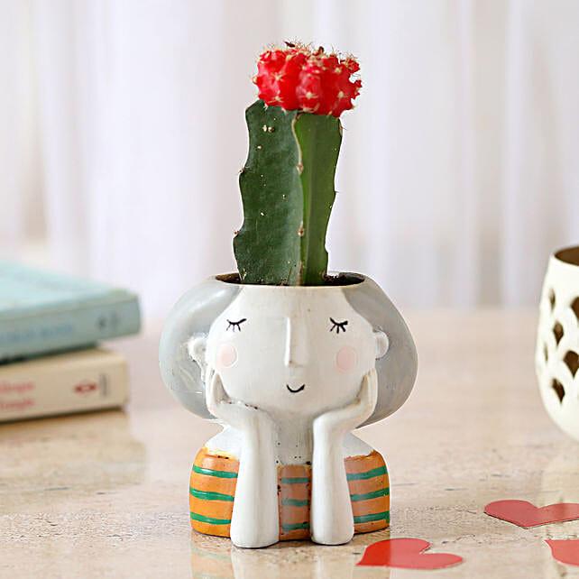 Moon cactus plant in attractive vase
