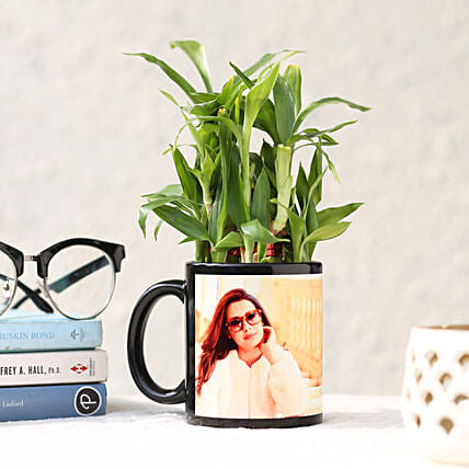 2 Layer Personalised Lucky Bamboo Online