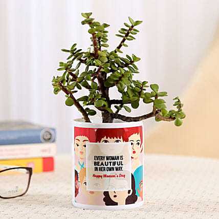 Jade Plant with Printed Pot