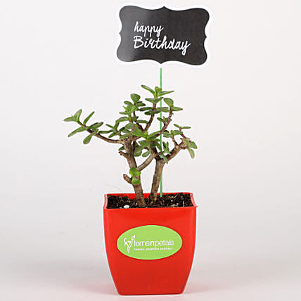 Jade Plant In Red Pot With Happy Birthday Tag