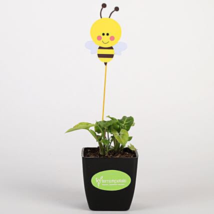 Syngonium Variegated Plant In Black Pot With Honey Bee Tag