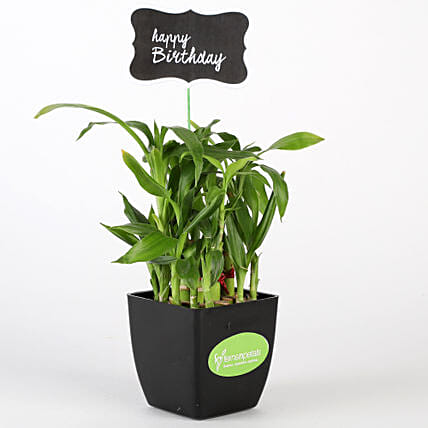 Two Layer Bamboo Plant In Black Pot With Happy Birthday Tag