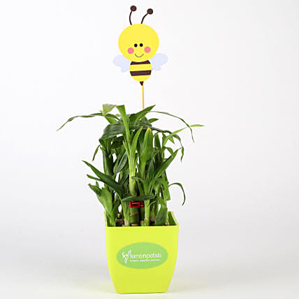 Two Layer Bamboo Plant In Green Pot With Honey Bee Tag