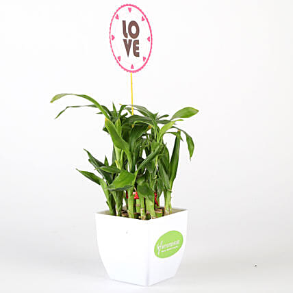 Two Layer Bamboo Plant In White Pot With Love Tag