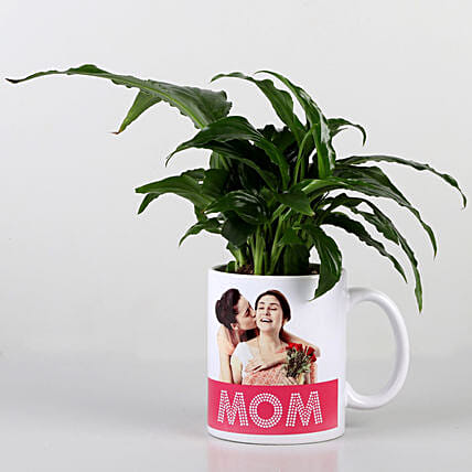 green plant in printed mug for mom