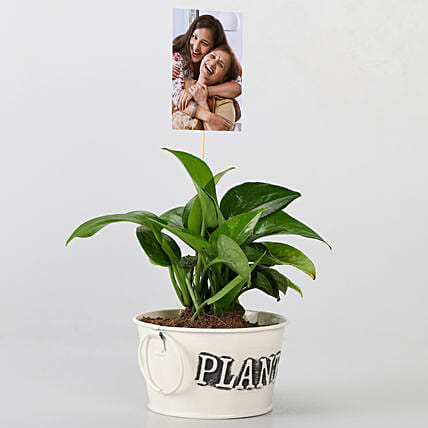 Money Plant With HP Sprocket Image