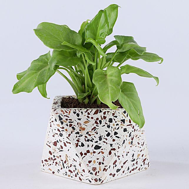 Xanadu Plant White Terrazzo Concrete Pot