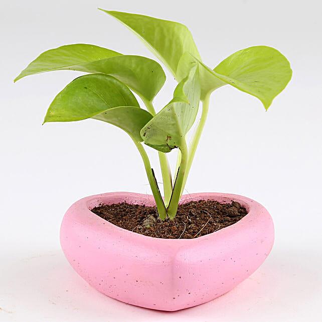 Golden Money Plant In Small Heart Concrete Pot