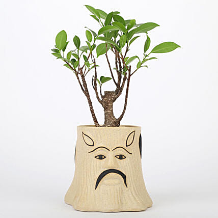 Online Ficus I Shaped Bonsai Plant For Mothers Day