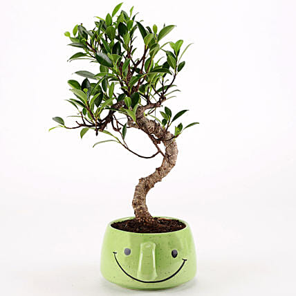 Ficus S Shaped Plant in Green Smiley Pot