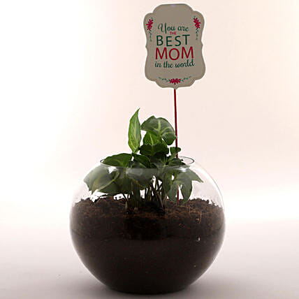 Mothers day plant in circular bowl