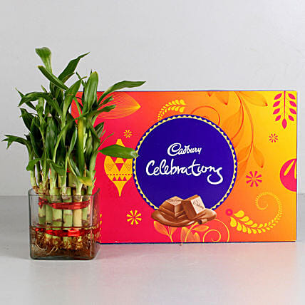 Bamboo Plant and Cadbury Chocolate Combo for valentine