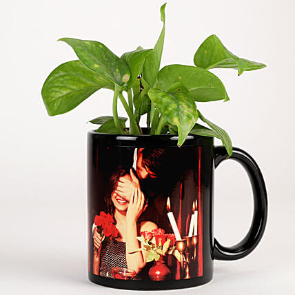 indoor plant in ceramic mug