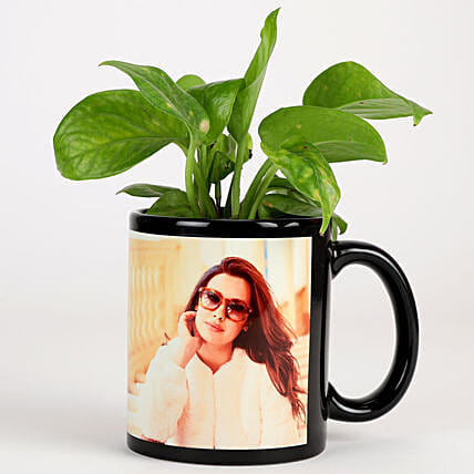 Green plant in printed mug