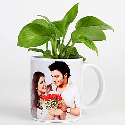 money plant in photo mug