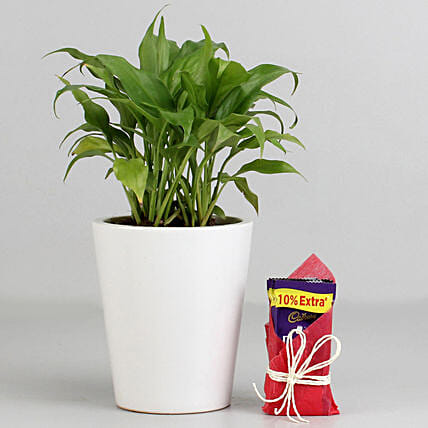 Lily Pot Plant And Chocolate For Valentine