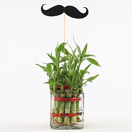 Bamboo Plant for Him Online