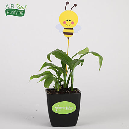 Peace Lily Plant In Black Pot With Honey Bee Tag