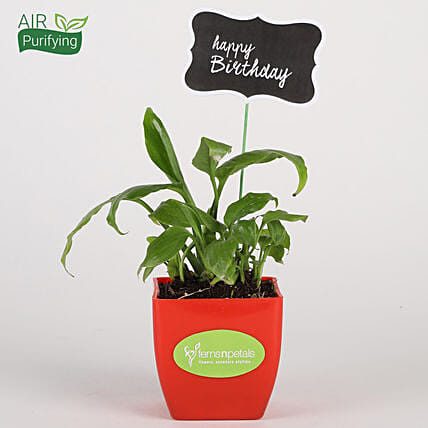 Peace Lily Plant In Red Pot With Happy Birthday Tag