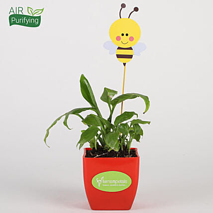 Peace Lily Plant In Red Pot With Honey Bee Tag
