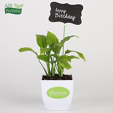 Peace Lily Plant In White Pot With Happy Birthday Tag