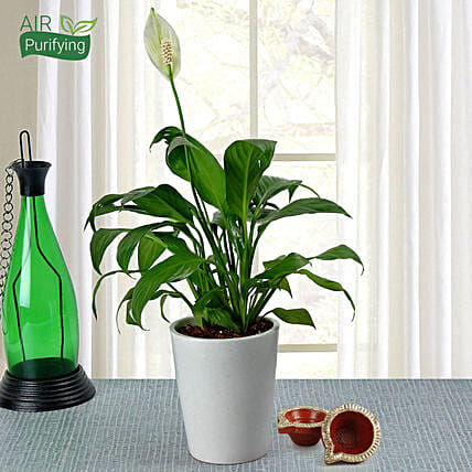 Diwali Special Peace Lily Plant in Ceramic Pot