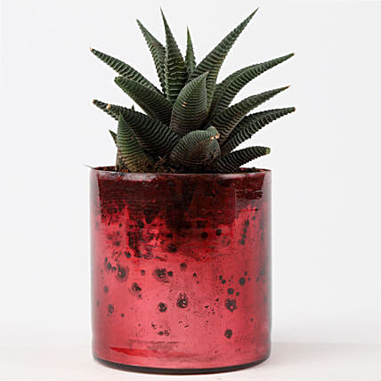 Plant and Glass Vase Online