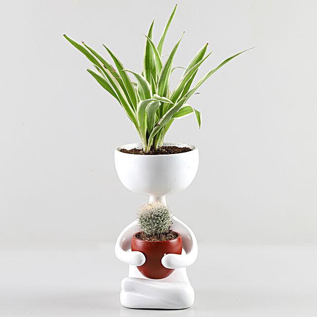 Spider & Echinocactus Plant Combo In White Figurine