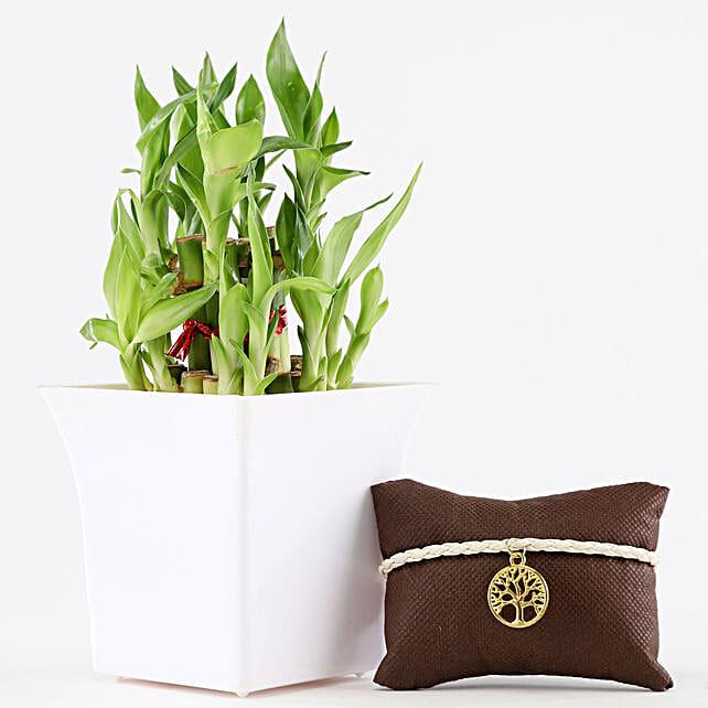 2 Layer Bamboo In White Pot Designer Tree Rakhi