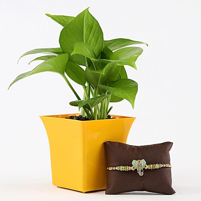 Money Plant in Yellow Pot Lord Ganesha Rakhi