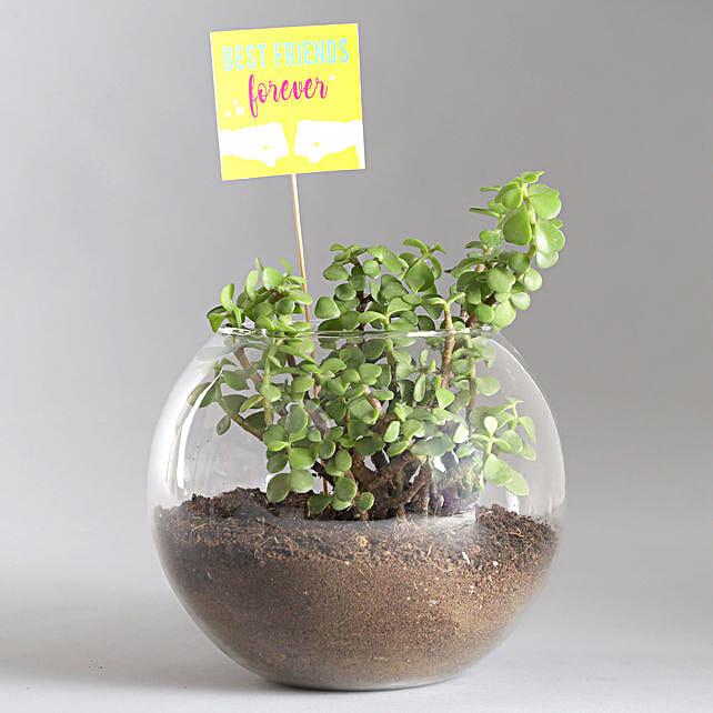 Friends Forever Jade Plant Terrarium