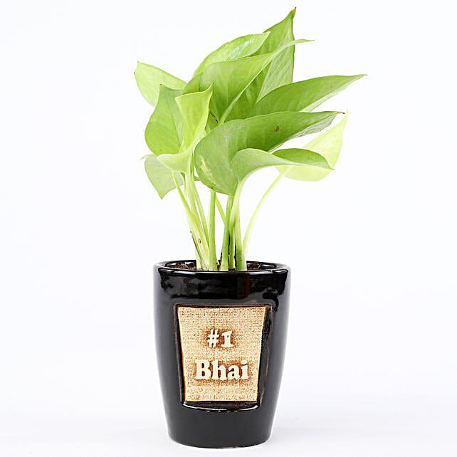 Golden Money Plant In No One Bhai 3D Pot