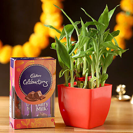 2 Layer Lucky Bamboo With Cadbury Celebrations