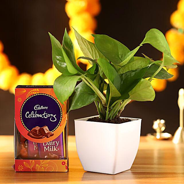Money Plant With Cadbury Celebrations
