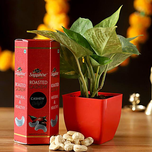 Money Plant With Roasted Cashews