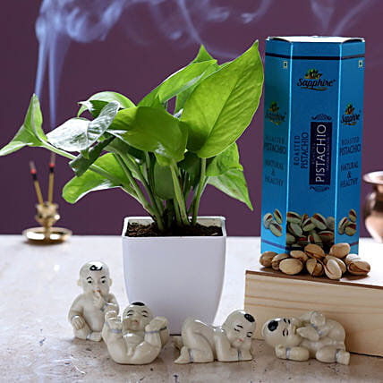 Money Plant With Pistachios & Laughing Buddha